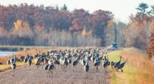 This Little Known Wildlife Area Is One Of The Best Birdwatching Spots In The U.S.
