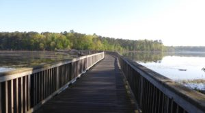 There's So Much To Love About This Hidden Boardwalk Trail In Virginia