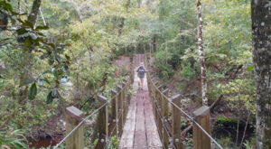 The Shady, Creekside Trail In Florida You'll Want To Hike Again And Again