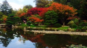 These 4 Vibrant Japanese Gardens In Washington Are Picture Perfect