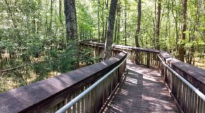 9 Wonderfully Scenic Hikes In Louisiana Almost Anyone Can Do