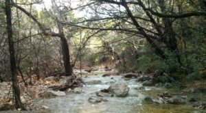 The Shady, Creekside Trail In Austin You'll Want To Hike Again And Again