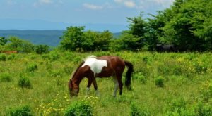 You'll Love The Wild Ponies Along This Magical Forest Hike In Virginia