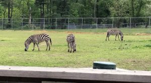 Most People Don't Know About This Underrated Zoo Hiding In Maryland