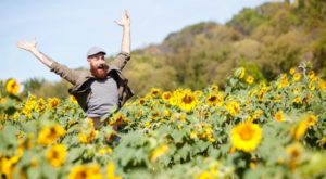 There's An Enormous Sunflower Maze In Cincinnati That's Just As Magnificent As It Sounds