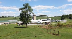 A Trip To This Incredible Ice Cream Farm In Maryland Will Delight You In Every Way