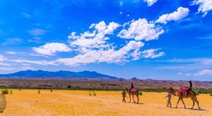The Spectacular Camel Safari You Can Only Take In Nevada