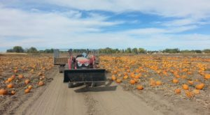 Nothing Says Fall Is Here More Than A Visit To Nevada's Charming Pumpkin Farm