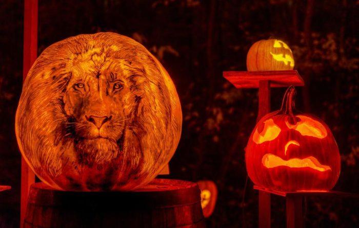 Jack O Lantern Spectacular Mn Zoo Coupon