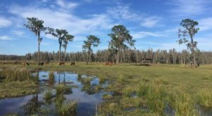 The Incredible Safari In Florida That Will Make You Feel Like You've Crossed Continents