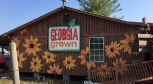 A Trip To This Charming Georgia Pumpkin Patch Makes For An Excellent Fall Outing