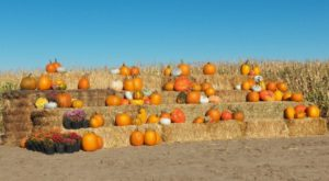 Nothing Says Fall Is Here More Than A Visit To Wyoming's Charming Pumpkin Farm