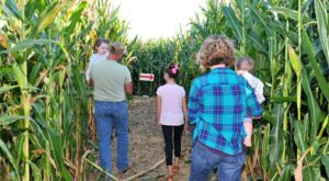 Get Lost In This Awesome 8-Acre Corn Maze In Missouri This Autumn