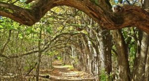This Easy Fall Hike In Ohio Is Under 2 Miles And You'll Love Every Step You Take