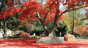 Nothing Says Fall Is Here More Than A Visit To Virginia's Charming Maple Garden