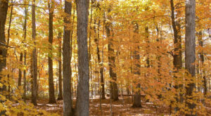 You'll Be Happy To Hear That Missouri's Fall Foliage Is Expected To Be Bright And Bold This Year