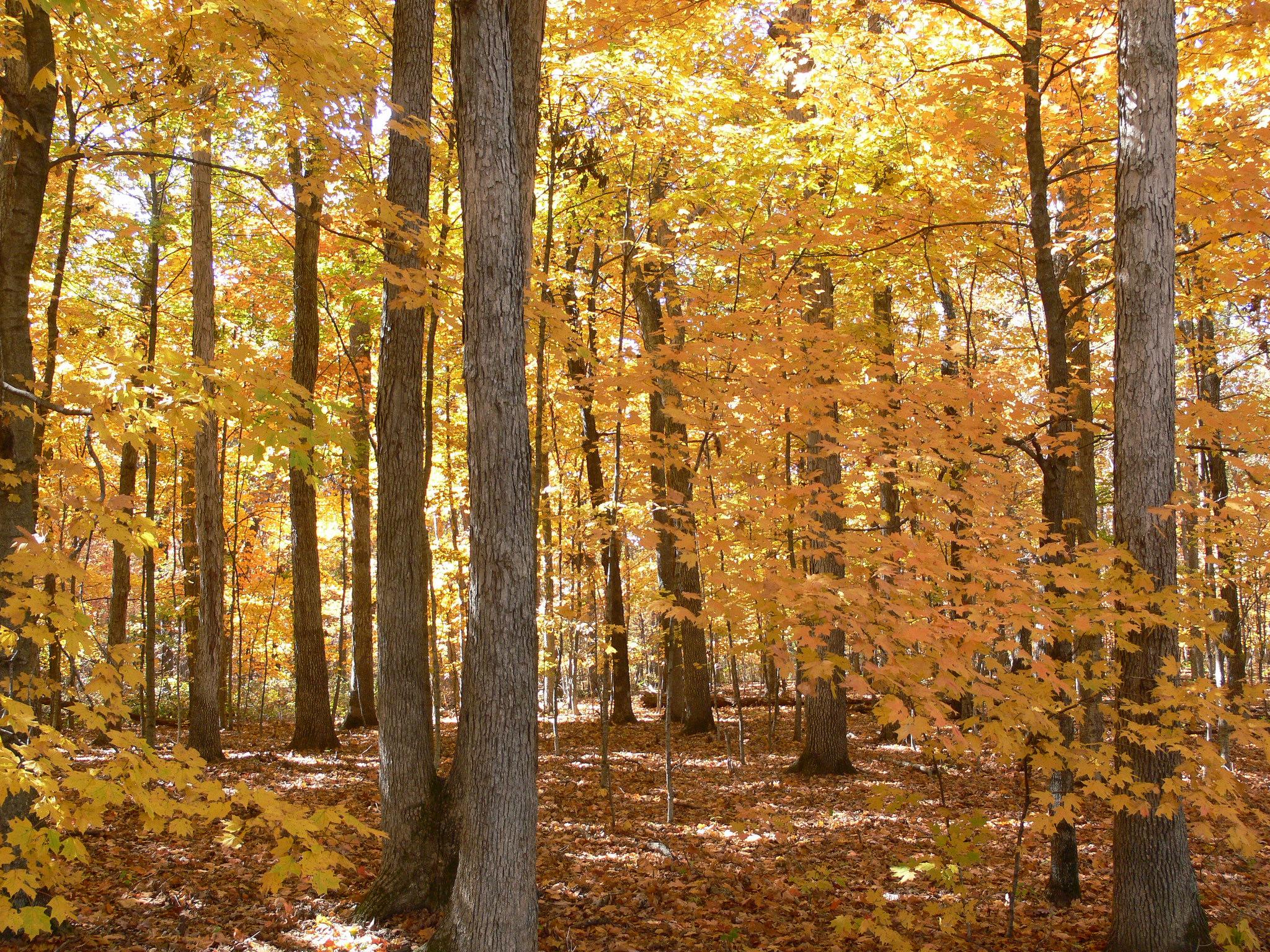 Fall foliage festivalteach to be happy day