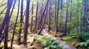 This Woodland Boardwalk Trail In Massachusetts Is Absolutely Bewitching