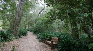 The Ancient Forest In Southern California That's Right Out Of A Storybook