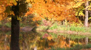 You'll Be Happy To Hear That Alabama's Fall Foliage Is Expected To Be Bright And Bold This Year
