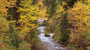 You'll Be Happy To Hear That South Dakota's Fall Foliage Is Expected To Be Bright And Bold This Year