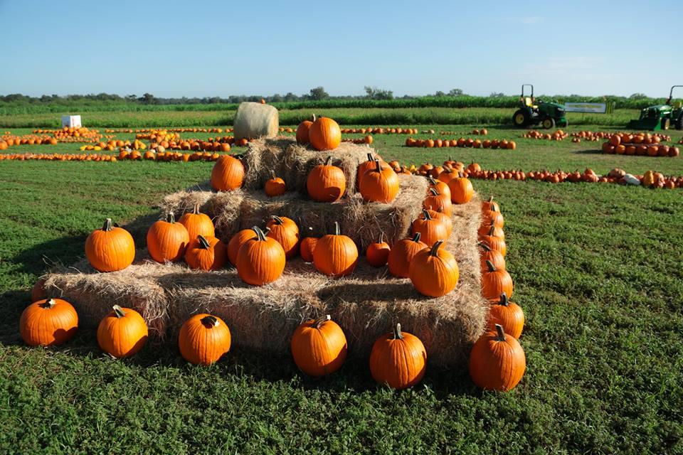 pumpkin patch nashville tn
