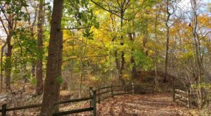 The Awesome Hike That Will Take You To The Most Spectacular Fall Foliage In Delaware