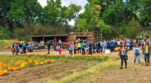 It Doesn't Get Any More New Mexico Than This Southwest Harvest Festival