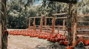 The Mississippi Farm That Transforms Into A Halloween Wonderland Each Year
