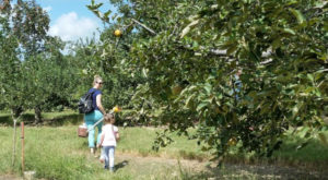 Nothing Says Fall Is Here More Than A Visit To This South Carolina Charming Apple Farm
