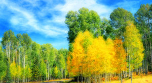 Fall Is Here And These Are The 11 Best Places To See The Changing Leaves In Arizona