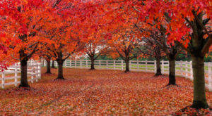 You'll Be Happy To Hear That New Jersey's Fall Foliage Is Expected To Be Bright And Bold This Year