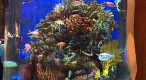 The 200,000-Gallon Aquarium At This Deep Ocean-Themed Restaurant In Tennessee Is A Sight To See
