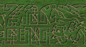 Get Lost In This Awesome 6-Acre Corn Maze In Nevada This Autumn