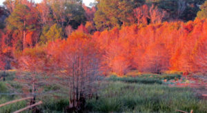 You'll Be Happy To Hear That Mississippi's Fall Foliage Is Expected To Be Bright And Bold This Year