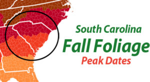 You'll Be Happy To Hear That South Carolina's Fall Foliage Is Expected To Be Bright And Bold This Year