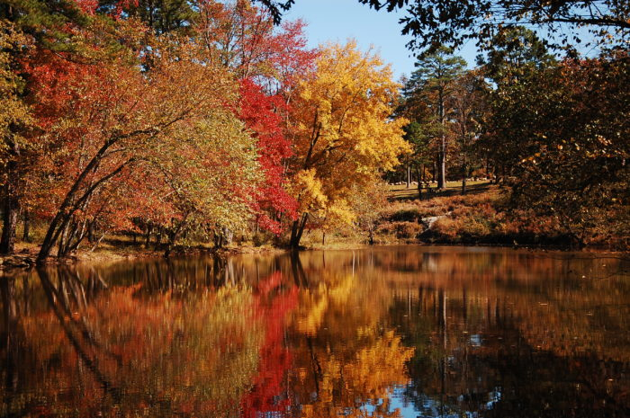 arkansas fall foliage  expected   bright  bold 700 x 465 · jpeg