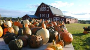 Visit These 7 Charming Farms In Rhode Island For Endless Fall Fun