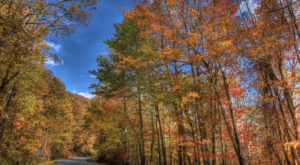 You'll Be Happy To Hear That Georgia's Fall Foliage Is Expected To Be Bright And Bold This Year