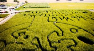 Get Lost In This Awesome 6-Acre Corn Maze In Northern California This Autumn