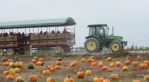 A Trip To This Charming Pennsylvania Pumpkin Patch Makes For An Excellent Fall Outing