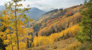 Fall Is Coming  And These Are The 9 Best Places To See The Changing Leaves In Utah