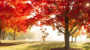 You'll Be Happy To Hear That Oklahoma's Fall Foliage Is Expected To Be Bright And Bold This Year