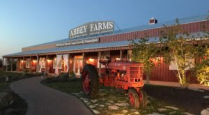 This 40-Acre Pumpkin Farm In Illinois Is The Classic Fall Experience You Need