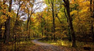 The Enchanting Halloween Hike In Illinois Your Whole Family Will Love