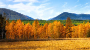 You'll Be Happy To Hear That Montana's Fall Foliage Is Expected To Be Bright And Bold This Year