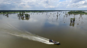 Experience The Louisiana Swamp Like Never Before With This Unforgettable Airboat Tour