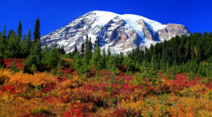 You'll Be Happy To Hear That Washington's Fall Foliage Is Expected To Be Bright And Bold This Year