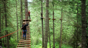 The Treetop Trail That Will Show You A Side Of Oregon You've Never Seen Before