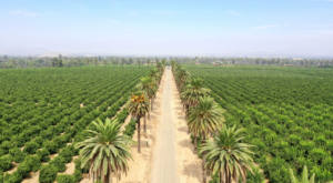 Stroll Through The Citrus Groves At This Majestic 248-Acre Park In Southern California